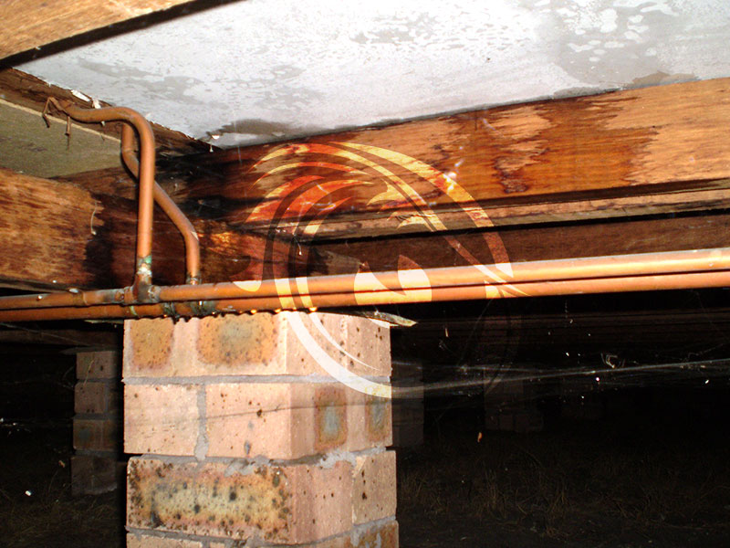 Leaking Shower causing potential structural damage to subfloor bearer and joist.